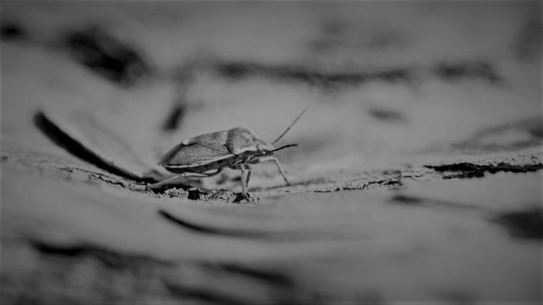 にっぽん昆虫記